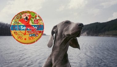 Petition to Recall Seresto Flea Collars Due to Nearly 1700 Pet Deaths - Featured Image