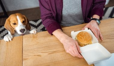 What Human Foods Can Dogs Eat - Featured Image