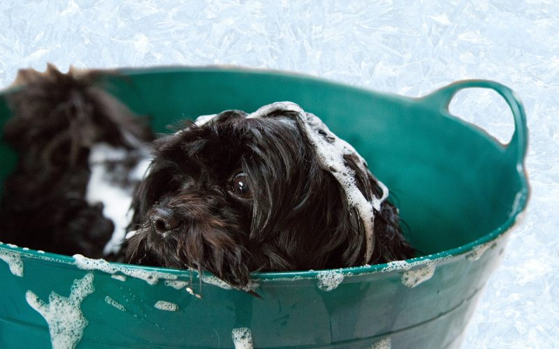 Dog Dies While Being Groomed at PetSmart