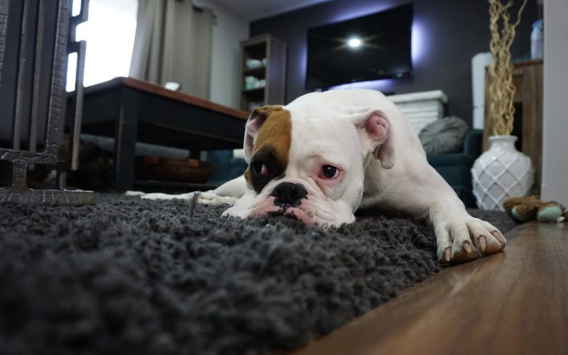How to Help Your Pets With Separation Anxiety