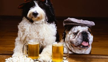 It's Five Paw'Clock Somewhere - Visit The Bark Social