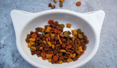 Latest Cat Food Recall Natural Balance