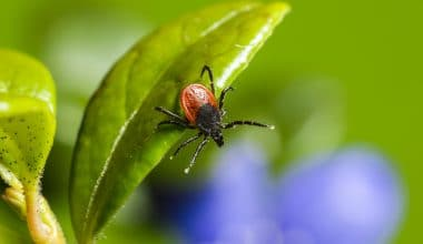 Learn the Facts During Lyme Disease Awareness Month