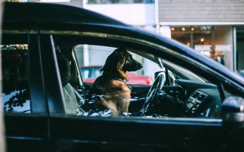 Pets in Hot Cars