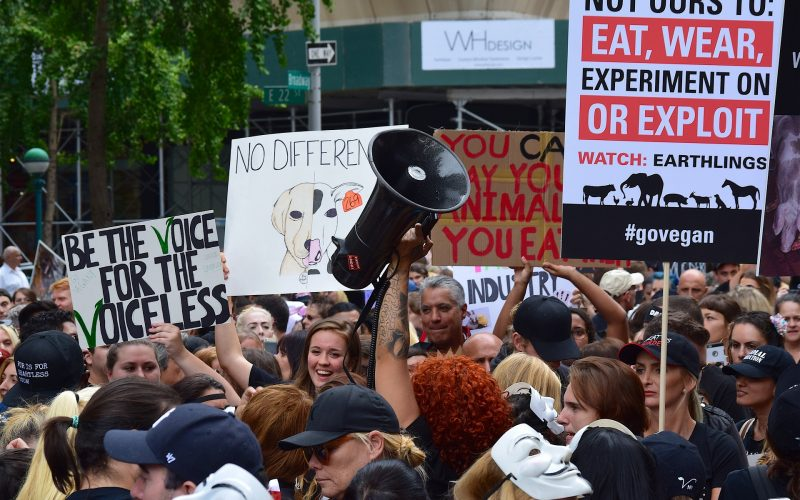 Animal Rights Awareness Week is June 14th-20th