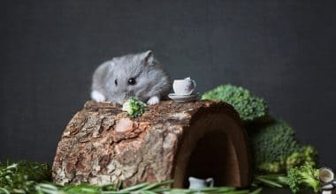 Best Hamster Food - Featured Image