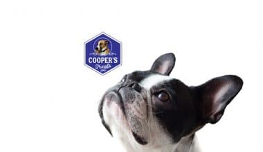 Cooper's Homemade Dog Treats Review - Featured Image1