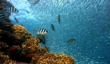 Ocean Floor to Be Fully Mapped by 2030, Passes 20% Mark