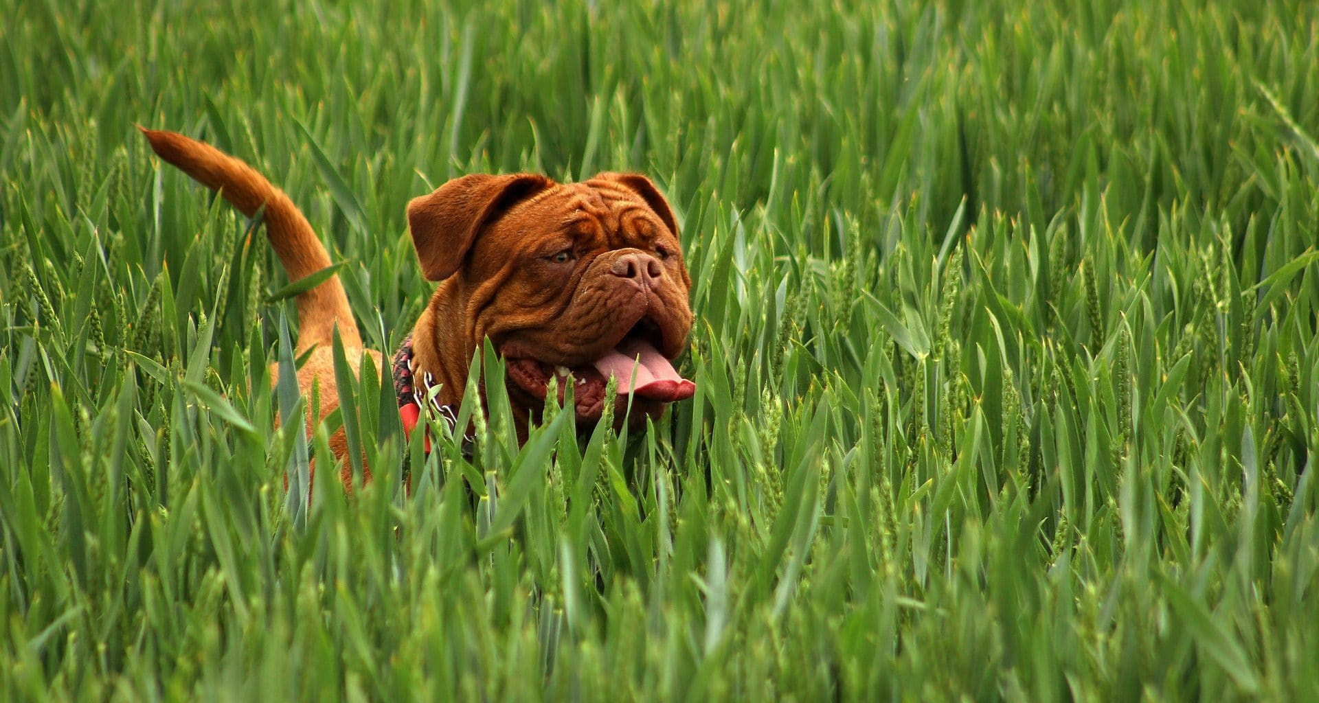 Ticks on Dogs - Featured Image