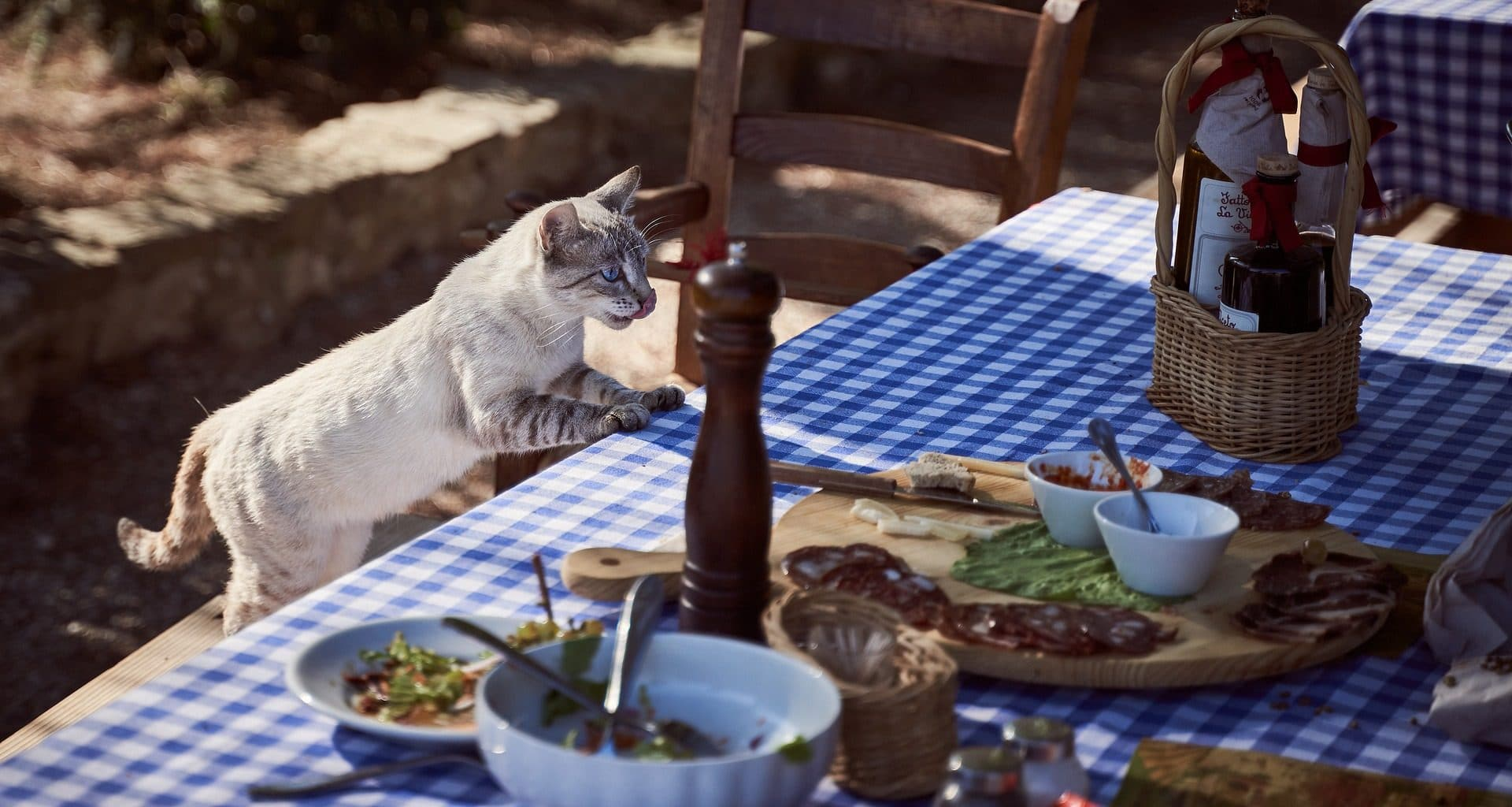 What Human Food Can Cats Eat - Featured Image