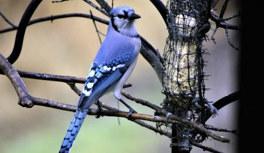 A Mysterious Illness Kills Songbirds in the Eastern US