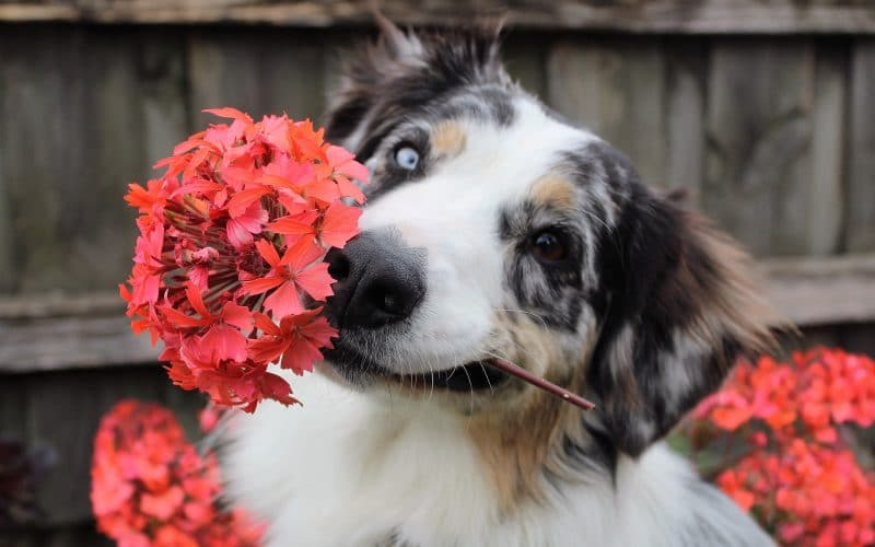 Plants Toxic to Dogs - Featured Image