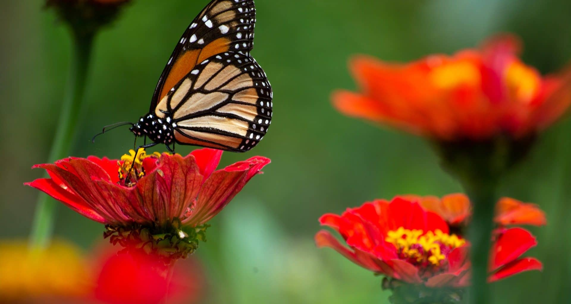 Butterfly Facts - Featured Image