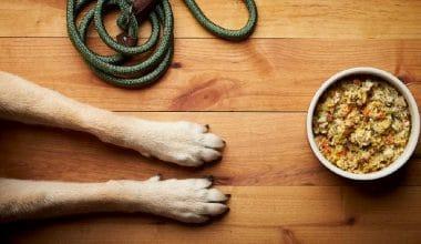 Wet Noses Company Recalls Simply Nourish Frozen Dog Food