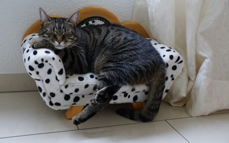 Pet Furniture Market Size to Reach Over $5 billion by 2027