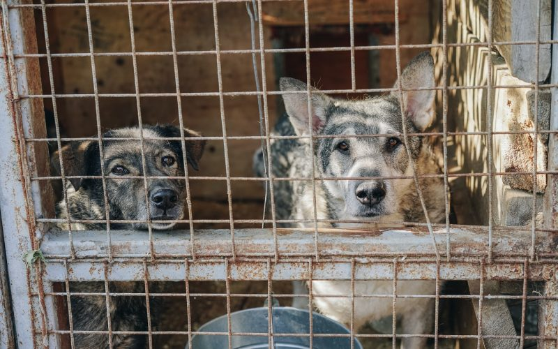 Puppy Mill Awareness Day 2021—Saying No to Animal Cruelty