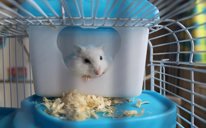 Small Pet Product Sales Grew by 18.5% in 2020