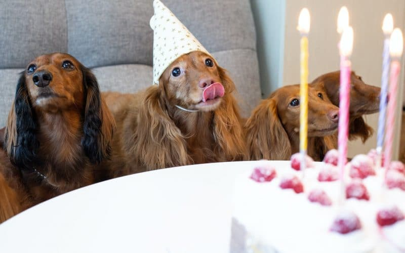 The National Dog Day Celebration 2021 — How To Participate
