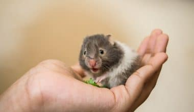 Hamster Facts - Featuring Image