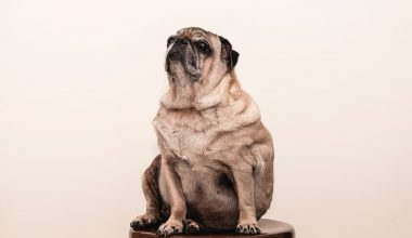 It's National Pet Obesity Day—Learn More
