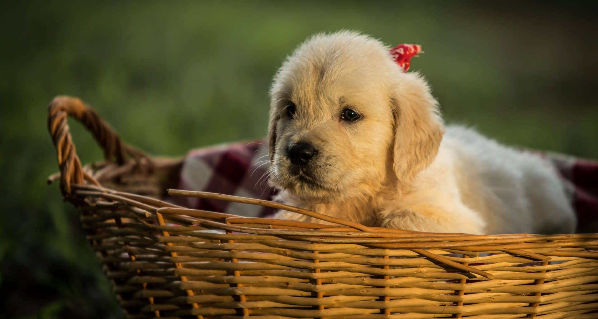 New Puppy Tips - Featuring Image