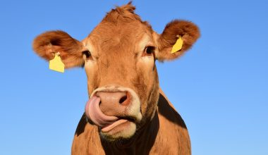 New Studies Suggest You Can Train Cows to Use Toilet
